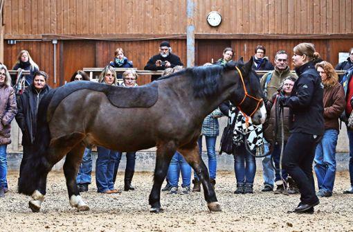 Bedürfnisse des Pferdes geben  Richtung vor