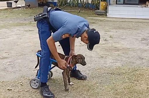 """Polizist schenkt Hund """"Tiger"""" neuen Lebensmut"""