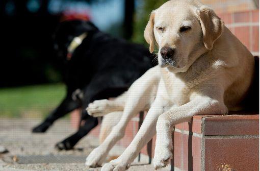 Erschöpfter Hund blockiert Landstraße