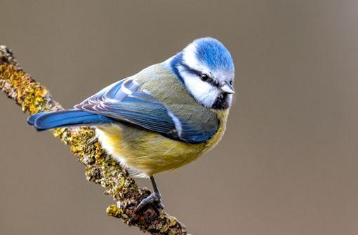 Wie Vogelschützer Spatz & Co. helfen