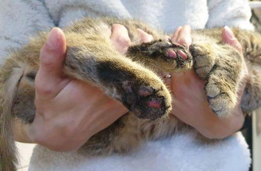 Katze mit Böllern gequält – 1000 Euro Belohnung für Hinweise