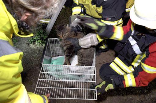 Katze nach Unfall aus Abwasserrohr gerettet