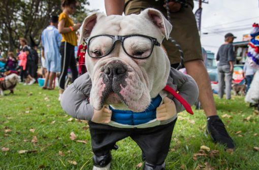 """""""Howl'oween"""" in Kalifornien: wenn Hunde zu Monstern werden"""