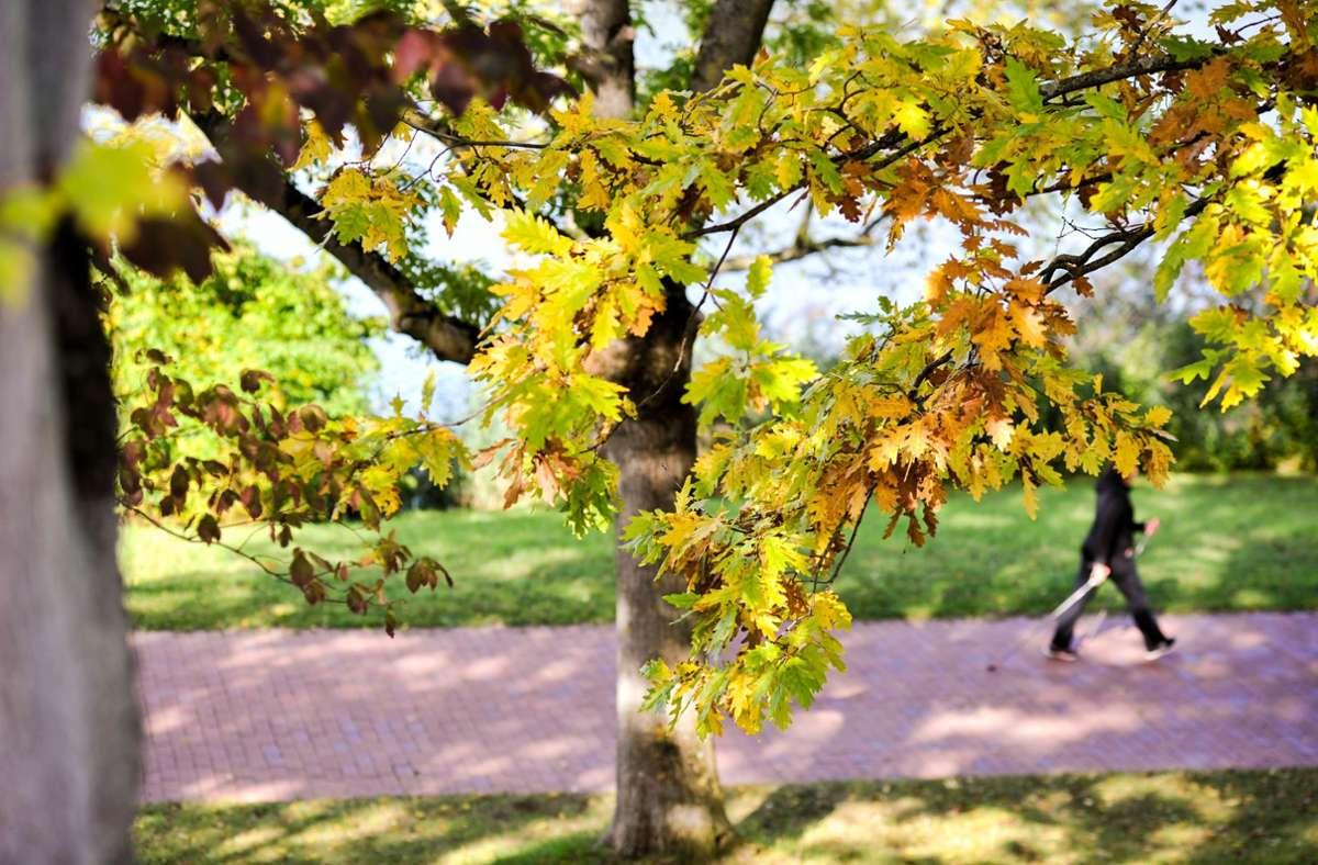 Am Dienstag gibt es im Südwesten einen angenehmen Herbsttag. Foto: Lichtgut/Max Kovalenko