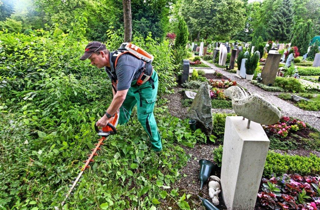 Viele Mitarbeiter kümmern sich um die Pflege der Leonberger Friedhöfe, wie hier Thilo Schmidt, der eine Hecke auf dem Waldfriedhof schneidet. Foto: factum/Granville