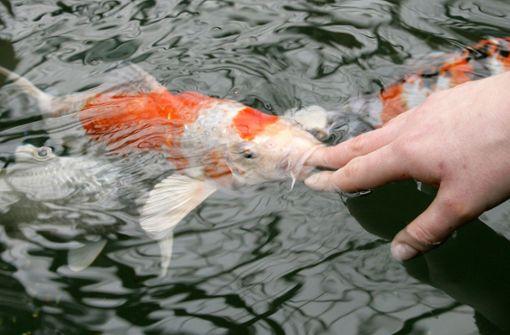 Wem gehört der gesprengte Fisch?
