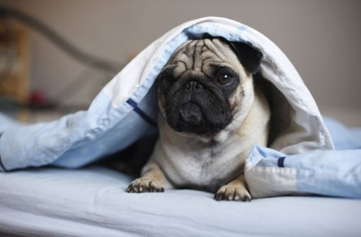 Tierischer Silvester-Stress für Hund, Katze und Co.