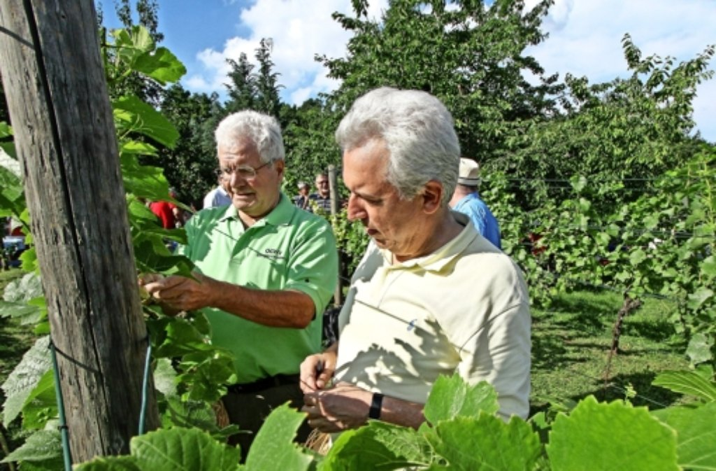 Albert Kaspari ist der Vorsitzende des Obst- und Weinbauvereins Eltingen-Leonberg, wir haben mit ihm über das Wengerterfest gesprochen. Foto: LKZ