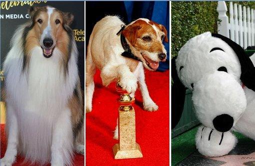 Das sind die zehn besten Film-Hunde