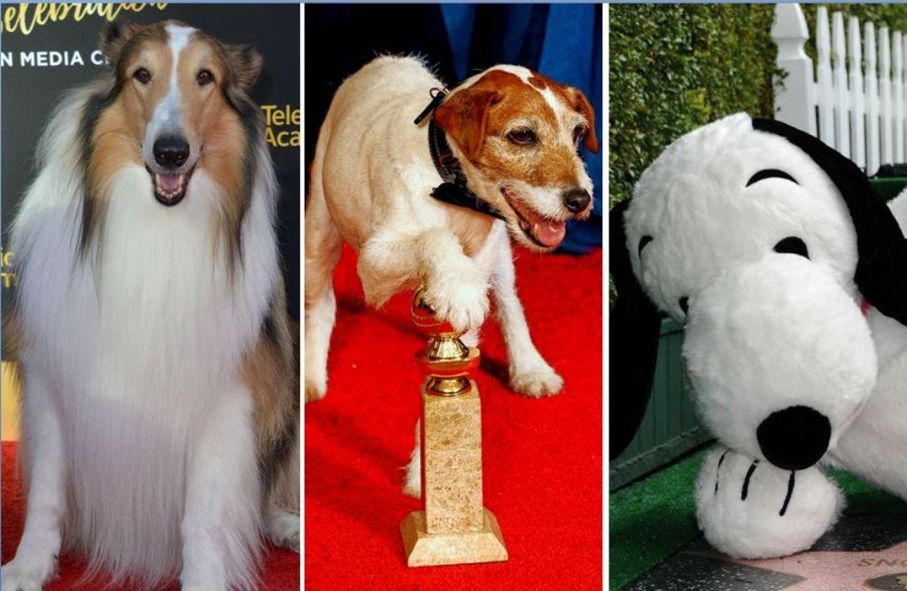 Lassie, Uggie, Snoopy: Manche Hunde sind wahre Filmstars geworden. Foto: Fotos: dpa (2), AFP