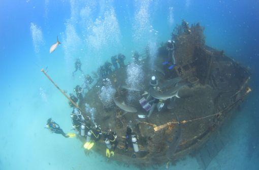 Unter Haien auf den Bahamas
