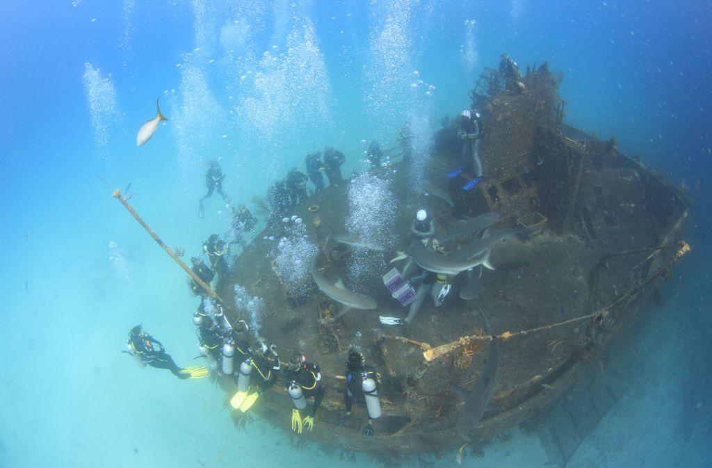Haifütterung am Wrack Foto: Stuart Cove's Dive Bahamas