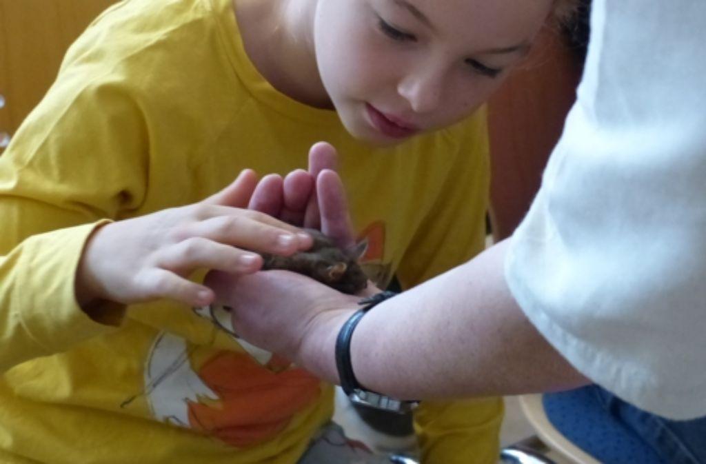 Fledermäuse wollen nicht gegen den Strich gestreichelt werden. Foto: Michael Käfer