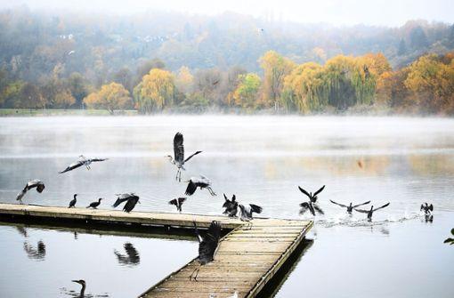 Wichtiger Rastplatz für Wasservögel