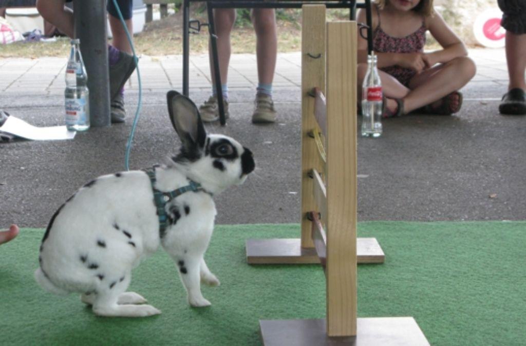 Unter den Kaninchen gibt es richtige Sprungwunder. Foto: Gabriele Lindenberg