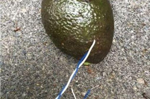 Polizei seziert verdächtige Avocado