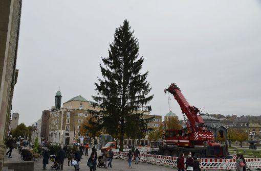 Weihnachtsbaum steht auf dem Schlossplatz