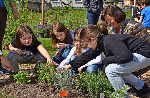 Pflanzen, säen und ernten statt konsumieren