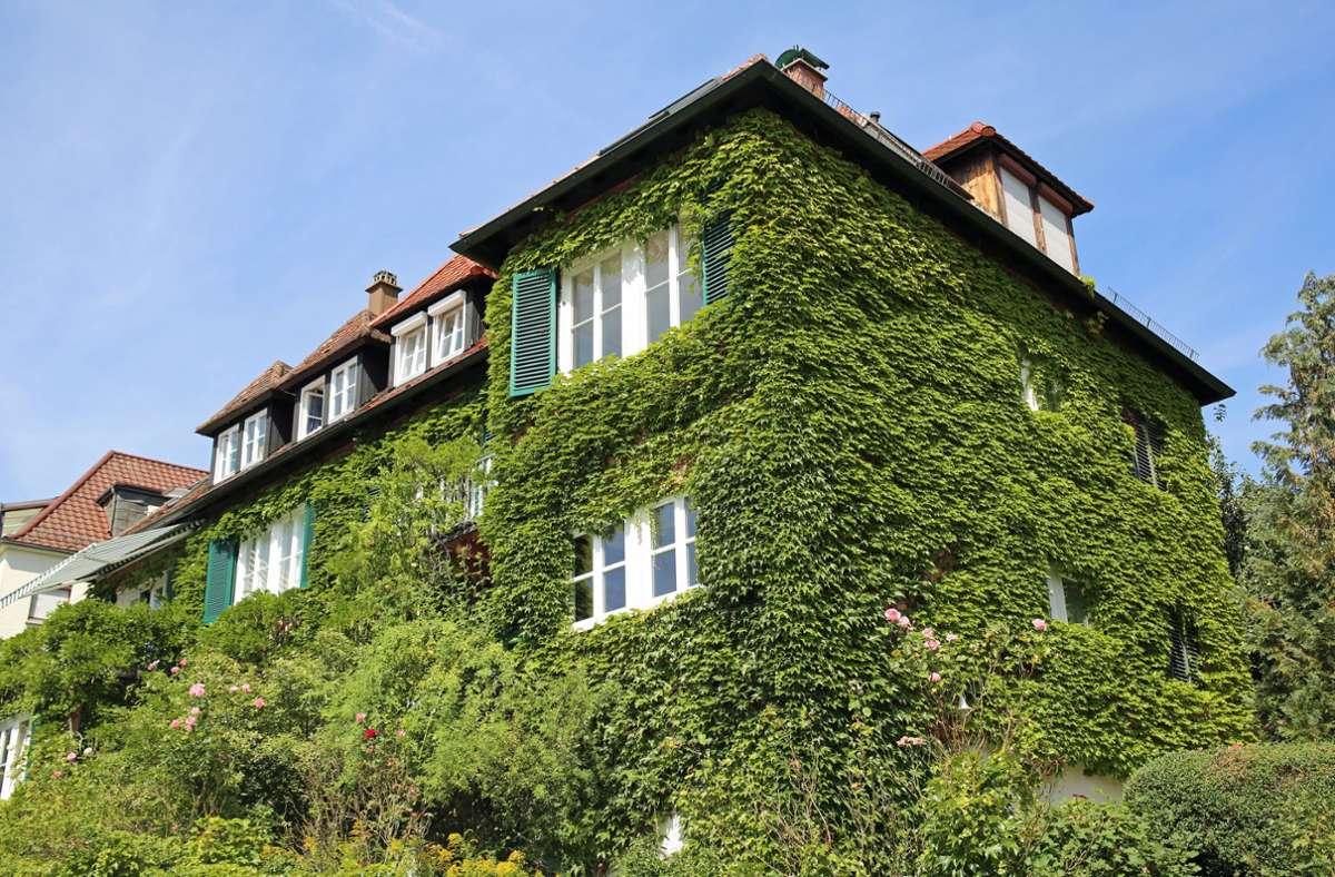 Grüne Oase in der Stadt: Das Haus der Familien Cramer und Rothfuss  im Stuttgarter Westen. Foto: StZN/Jonas Schöll