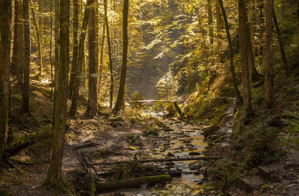 """Die stimmungsvolle Landschaft  des Schwäbischen Waldes kann beim """"Tag des Schwäbischen Waldes"""" entdeckt werden Foto: FVG Schwäbischer Wald/Photographer: Stefan Bossow"""