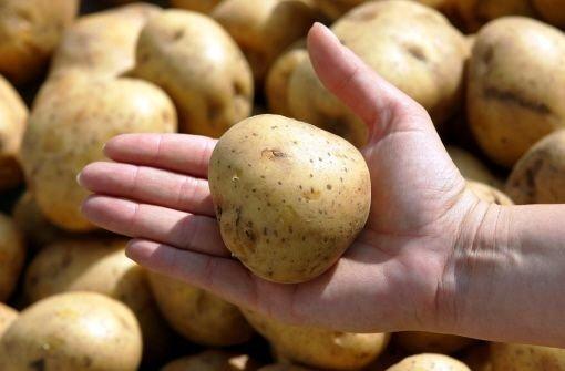 Neue Gen-Kartoffel steht vor Zulassung