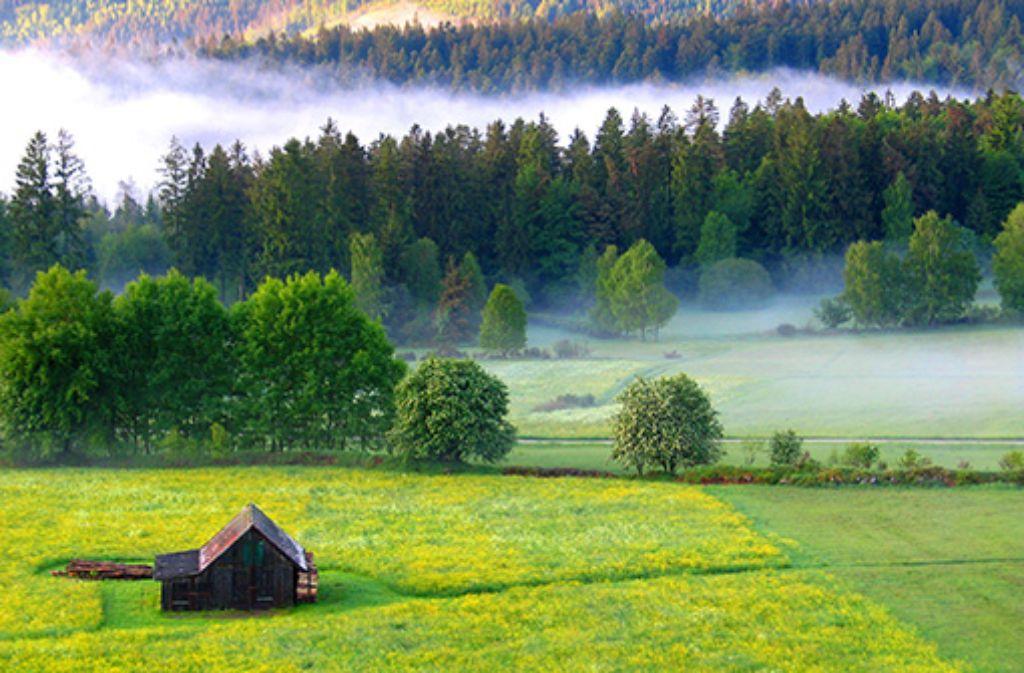 Entdecken Sie ursprüngliche Natur und ruhige Wanderwege im Nördlichen Schwarzwald  Foto: Nördlicher Schwarzwald