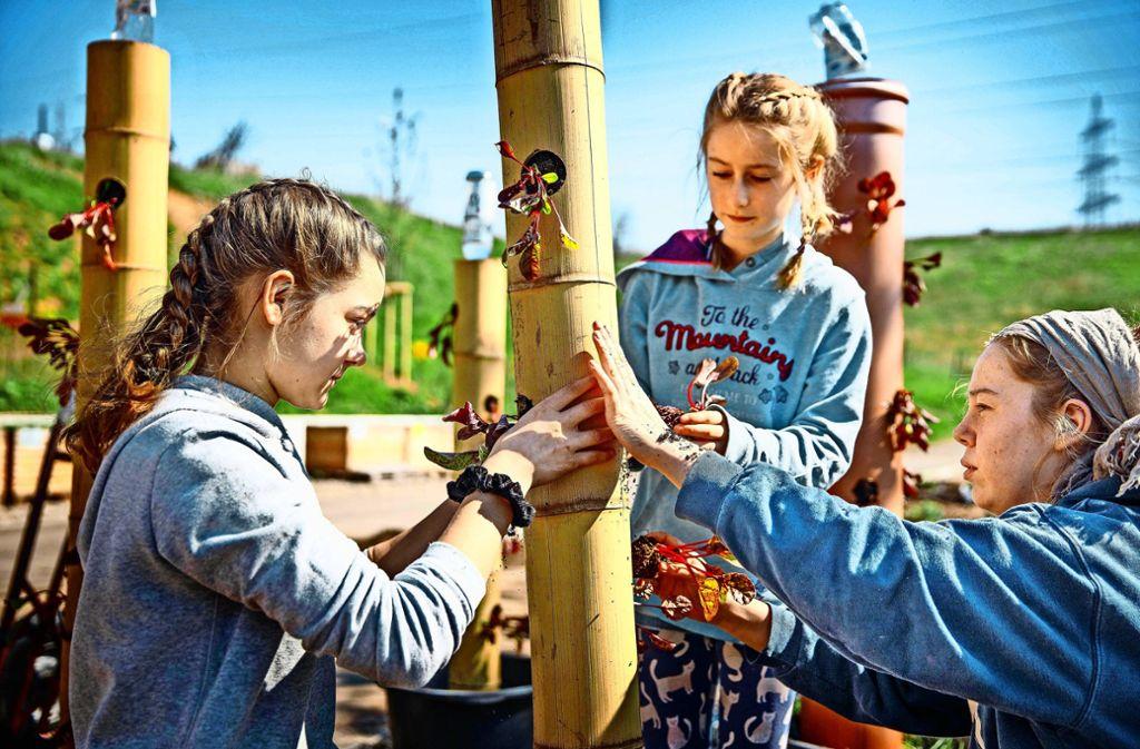 Beim Ferienprogramm auf der Jugendfarm verwandelten  diese Mädchen ein Bambusrohr in einen vertikalen Garten. Foto: Archiv/Stoppel