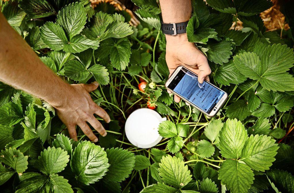 Ein Sensor-System erhebt Bodenfeuchte, Lufttemperatur und Luftfeuchtigkeit und sendet die Daten auf das Smartphone. Foto: Gottfried Stoppel