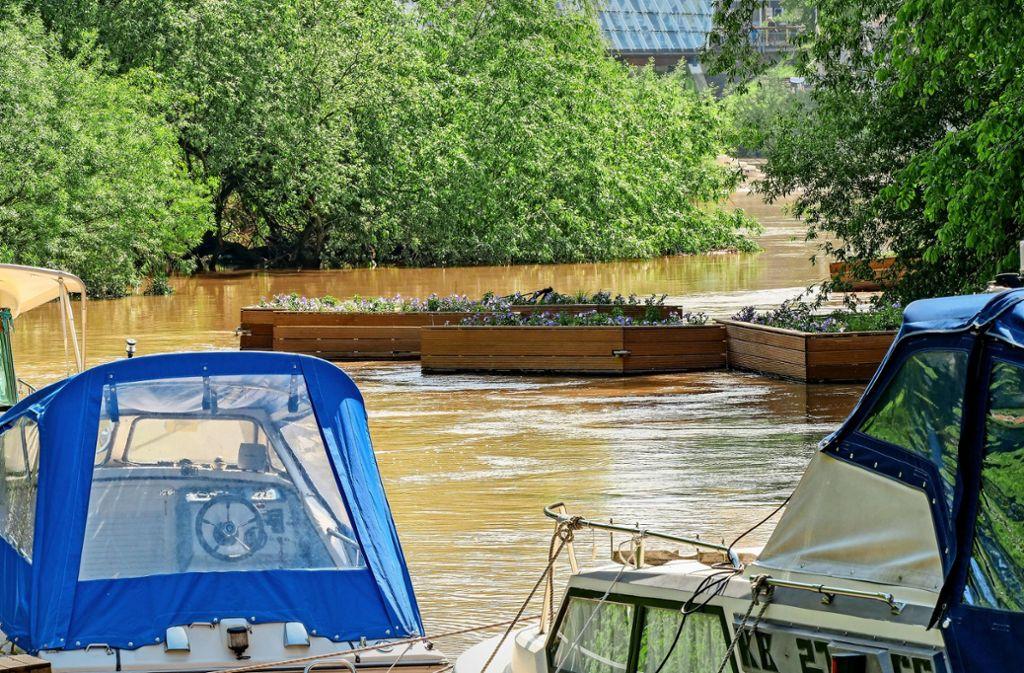Bei  der so genannten Liebesinsel in Neckarrems sind fünf der schwimmenden Blumenkästen aus Remseck angetrieben worden. Foto: