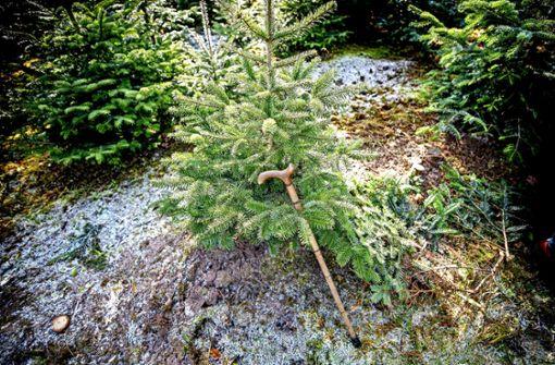 Seit 60 Jahren Christbaumverkäufer