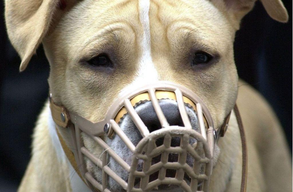 Anders als dieser American Staffordshire Terrier, trugen die Hunde in Leimen keinen Maulkorb. Foto: dpa/