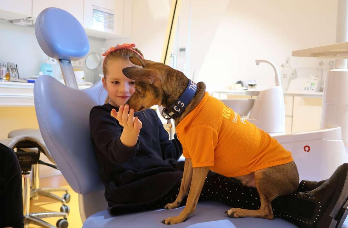 Die sechsjährige Mira im Behandlungsstuhl beim Zahnarzt – Therapiehund Peppi nimmt ihr die Angst. Foto: Steve Przybilla