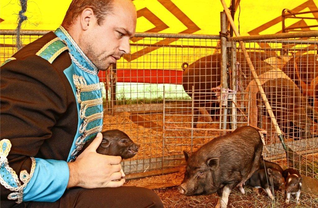 Zirkus-Direktor Ricardo Frank ist stolz auf die sieben kleinen Merklinger Schweinchen. Foto: factum/Bach