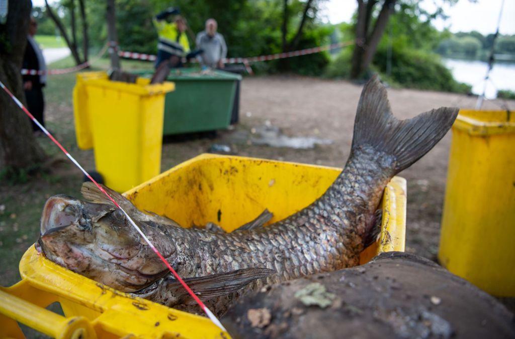Dramatisches Fischsterben in den vergangenen Tagen  im Max-Eyth-See. Wie ergeht es den Seen auf den  Fildern? Foto: picture alliance/dpa