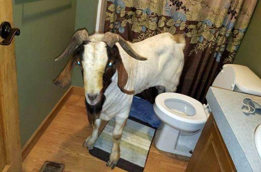 Tierischer Einbrecher macht Nickerchen im Bad