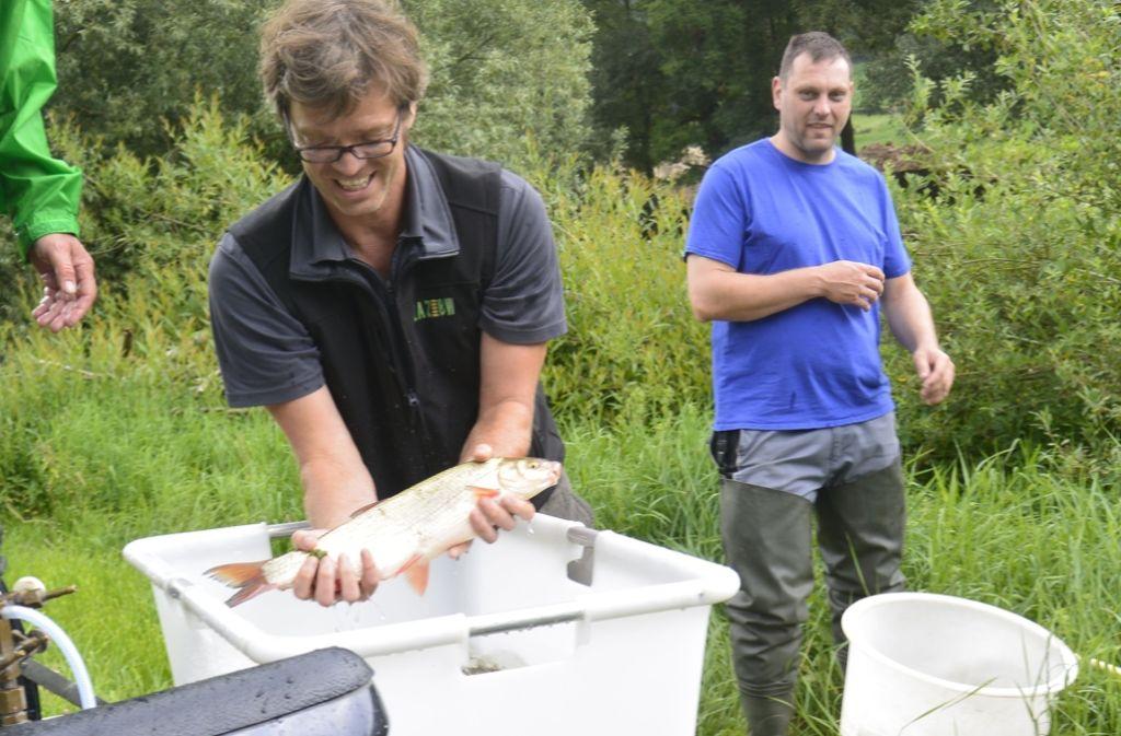 1200 Fische verschiedener Arten wurden in die Jagst eingesetzt. Foto: Kurz