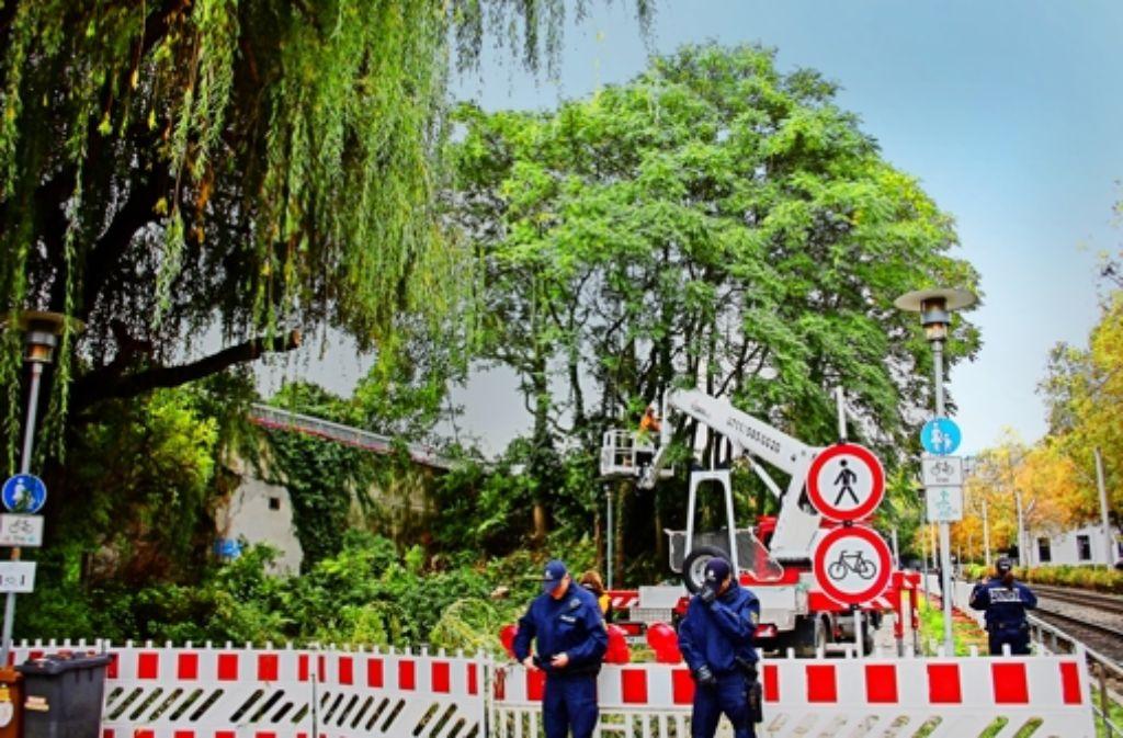 Weil es bei dem Polizeieinsatz im Schlossgarten um Baumfällungen  ging, müssen  die Akten dazu nach dem Umweltinformationsrecht offen gelegt werden. Foto: Georg Friedel