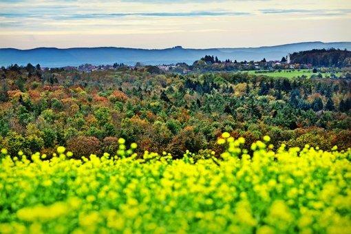 Die Aussicht  auf  Windräder im  Schurwald ist gering – deswegen bleibt die Aussicht auf  die Burg Hohenneuffen erhalten. Foto: Rudel/Archiv
