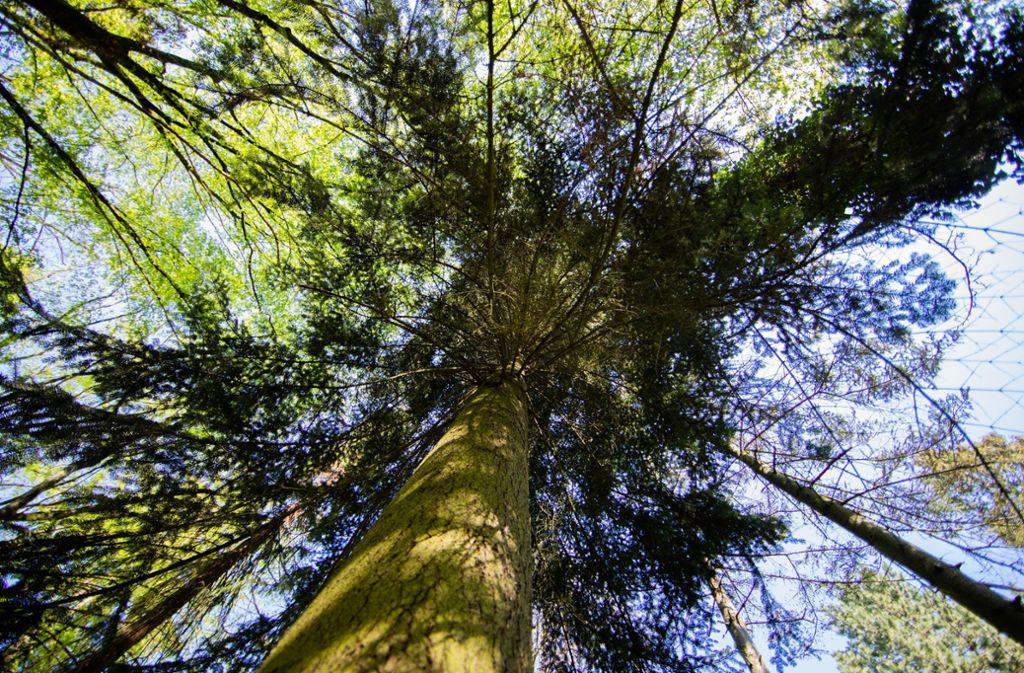 Bäume sind ein wertvolles Gut: Durch wiederkehrende Hitzeperioden wie 2018 sind  sie gefährdet. Foto: dpa