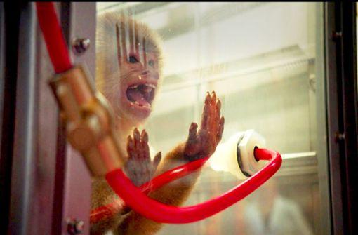 Die dubiosen Abgastests an Menschen und Affen