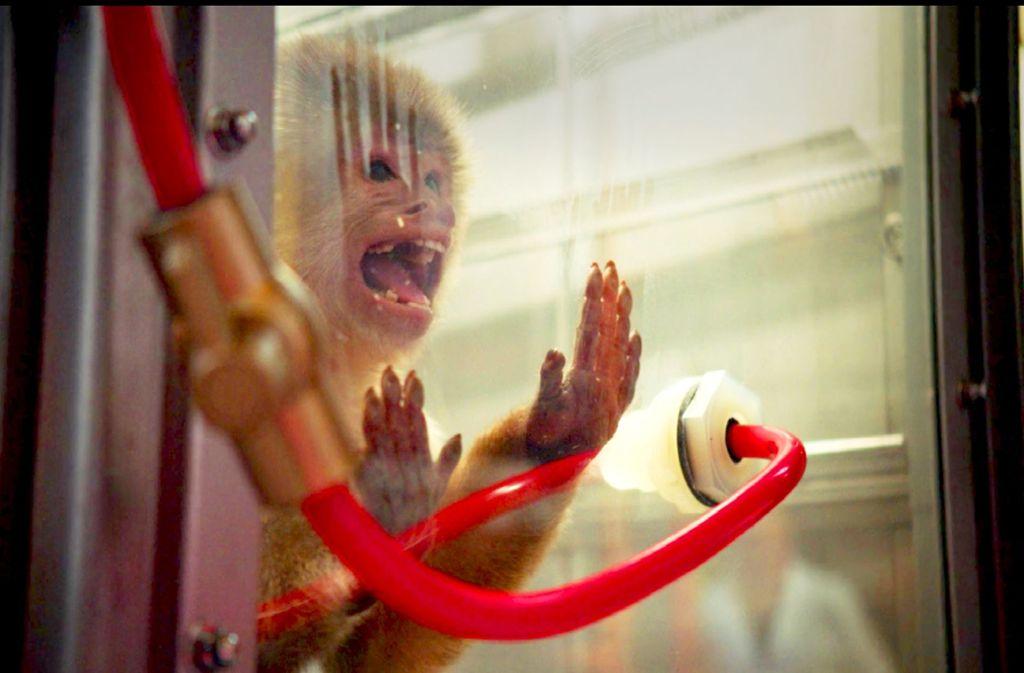 """Auch die neue Netflix-Dokumentation """"Dirty Money"""" zeigt in ihrer Auftaktepisode die Experimente mit den Makaken in New Mexico. Screenshot: StZ Foto: Netflix"""