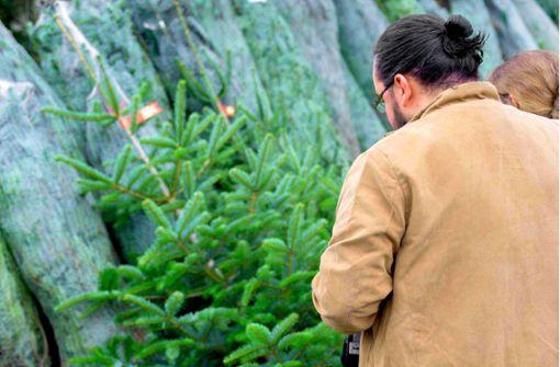 Warum viele Käufer auf regionale  Christbäume setzen