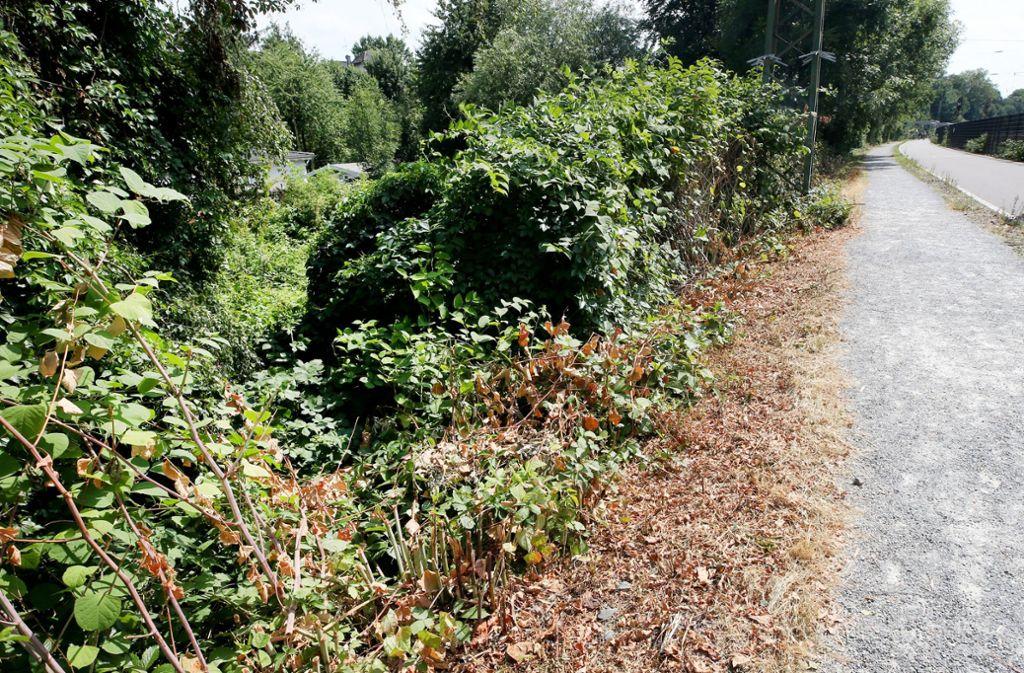 In der Nähe dieses Gebüsches, das an einem  Radschnellweg im nordrhein-westfälischen Mülheim liegt, soll die  junge Frau von fünf  Jugendlichen überfallen und sexuell missbraucht worden sein. Foto: Roland Weihrauch/dpa