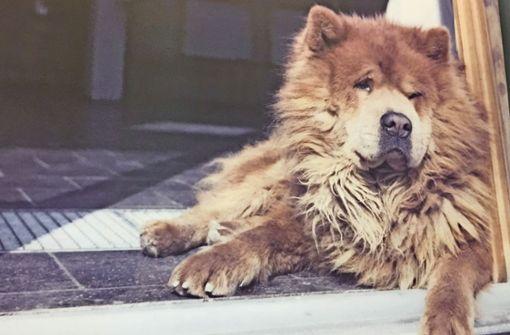 Der klügste Hund von Ulm