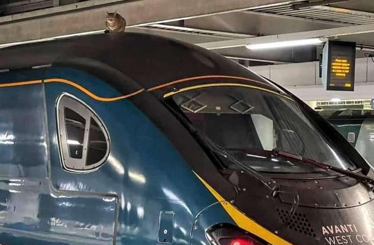 Eine Katze liegt auf dem Dach eines Hochgeschwindigkeitszugs des Verkehrsunternehmens Avanti West Coast am Bahnhof London Euston. Foto: dpa/Network Rail