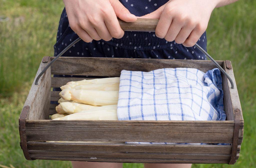 Spargel lagern und aufbewahren - So gehts Foto: Cora Mueller/Shutterstock
