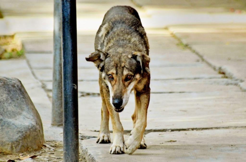 Herrenlose Hunde und alle anderen Fundtiere Foto: dpa