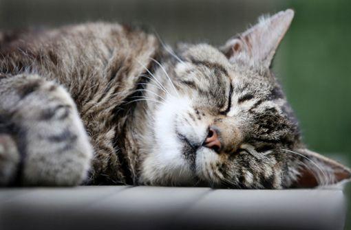 Ist der Besitzer aus dem Haus, leiden auch Katzen - manche zumindest