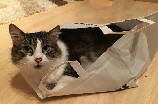 Wo sich Katzen überall reinquetschen