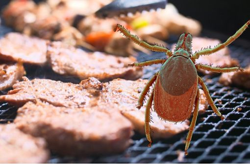 Gefährlicher Parasit kann Fleischallergie auslösen